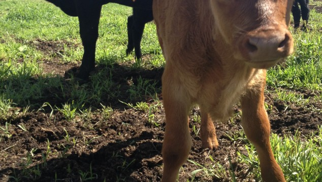 Farmin' Friday: life lately