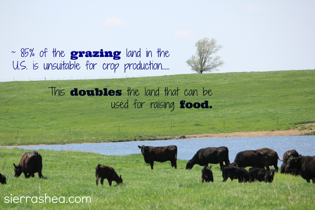 foodgrazing